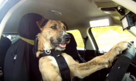 1 in 10 male drivers have lost control of a vehicle whilst travelling with their pet