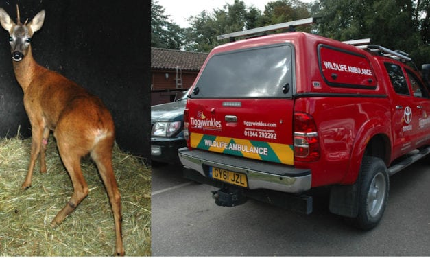 TIGGYWINKLES AND THEIR LIFESAVING TOYOTA HILUX